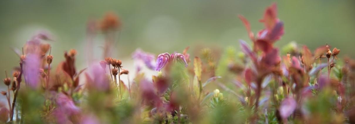 Pieniä kasveja kasvaa maasta