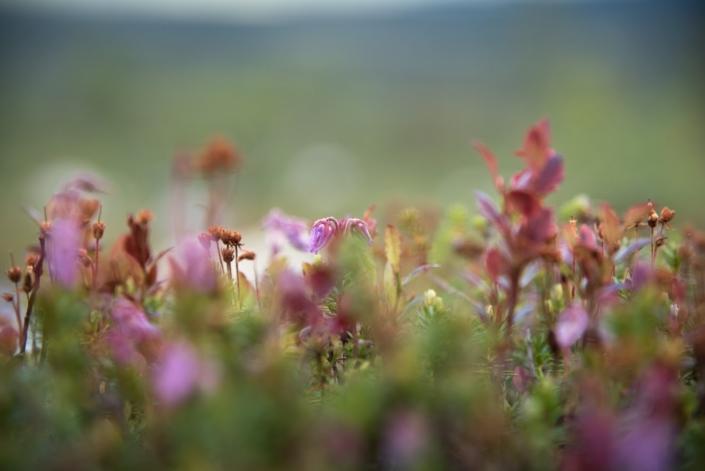 Små växter växer från marken