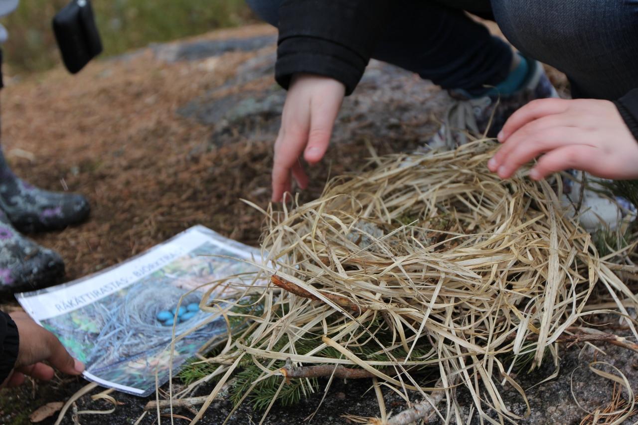 Oppilas rakentaa linnuspesää räkättirastaan mallin mukaan.