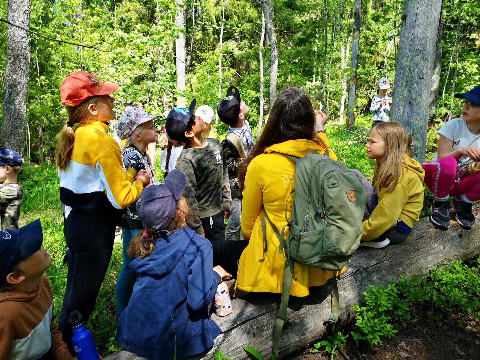 Lapset ja leirinohjaaja katselevat ylös puun runkoa pitkin.