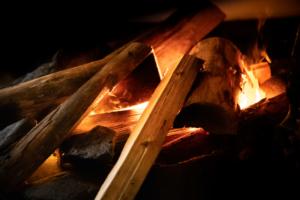 Puita nuotiossa. Träd på öppen eld.