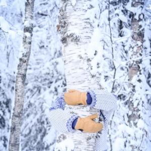 Kädet halaavat koivua talvisessa metsässä. Armarna kramar en björk i en vintrig skog.