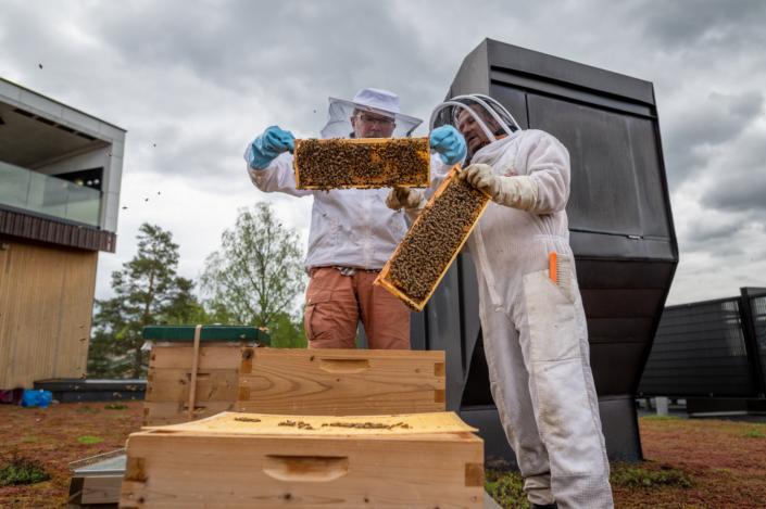 Miehet katsovat mehiläispesien kennoja