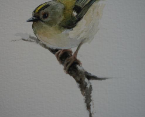 Akvarellilla piirretty lintu