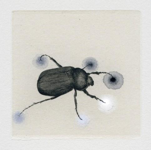 Piirroskuva hyönteisestä