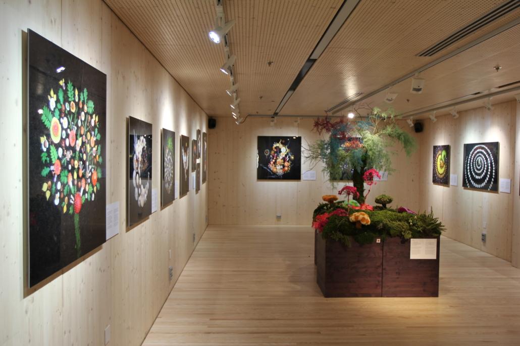 Näyttelytila jossa valokuvia ja luontoinstallaatio